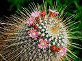 Les belles fleurs - panoramio - youssef alam (12).jpg