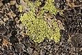Lichen (16160220174).jpg