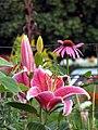 Lilies and coneflower (939823299).jpg