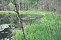 Liliju ezers, Baldones pagasts, Baldones novads, Latvia - panoramio (4).jpg