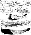 Lingual views of mandibles from selected pre-Emsian osteichthyans.jpg
