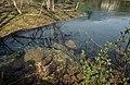 Livenza Fluss in Polcenigo, Italien, Provinz Pordenone, Europäische Union.jpg