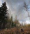 Lobnya, Moscow Oblast, Russia - panoramio (451).jpg