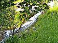 Localita' La Badia-torrente 2.jpg