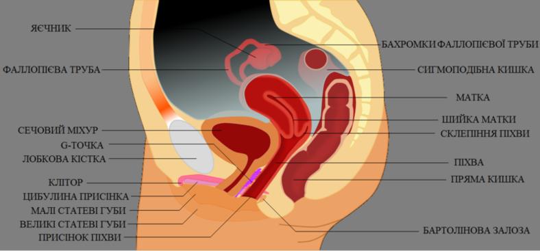 Трахав штучну вагіну фото 709-183