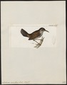 Lochmias nematura - 1820-1860 - Print - Iconographia Zoologica - Special Collections University of Amsterdam - UBA01 IZ19200127.tif