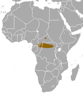 Ludias shrew Species of mammal