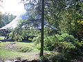 MASP carousel pavilion tree.JPG