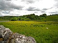 Malham, wet meadow - geograph.org.uk - 844388.jpg