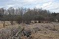 Marsh - Guelph, Ontario 2020-04-18 (01).jpg