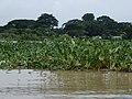 Marta Ward, Myanmar (Burma) - panoramio (21).jpg