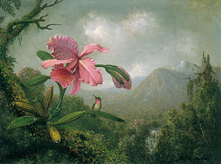 Orchid and Hummingbird near a Mountain Waterfall