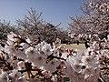 Marunouchi, Matsuyama, Ehime Prefecture 790-0008, Japan - panoramio (70).jpg