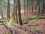 Mary Flagler Cary Arboretum - IMG 1658.jpg