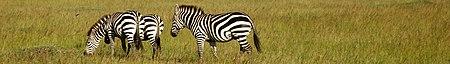 Masai Mara banner.jpg