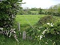 May blossom and grazing land - geograph.org.uk - 464451.jpg