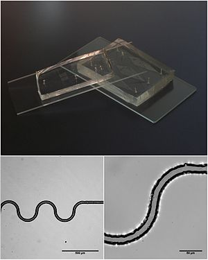 Microfluidic devices