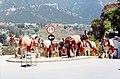 Mijas donkeys 01.jpg