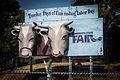 Minnesota State Fair Cow Heads Billboard (7992921089).jpg