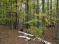 Mladší dubohabrový les.jpg