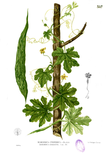 <i>Momordica charantia</i> Species of plant with bitter fruit