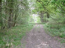 Monks Wood National Nature Reserve - geograph.org.uk - 436538.jpg