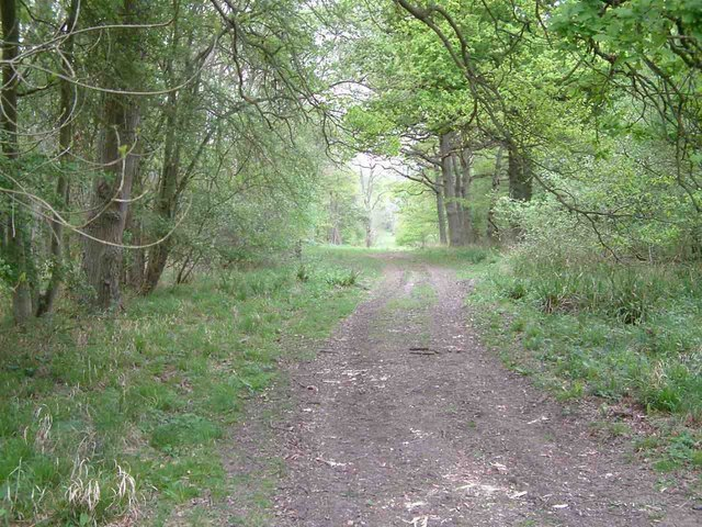 Monks Wood National Nature Reserve - geograph.org.uk - 436538