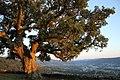 Monte de la Peneda (5850309915).jpg