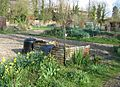 Multiple allotment plots - geograph.org.uk - 770864.jpg