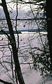 Muskoka Woods, Rosseau, Ontario in Winter - panoramio - A J Butler (4).jpg
