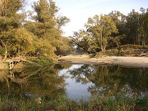 Danube crested newt - Image: NP Donau Auen