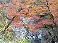 Nakatsu in Autumn.JPG