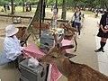 Nara, deers 01.JPG