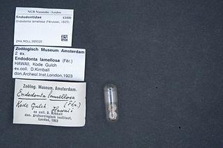 Endodontidae family of molluscs
