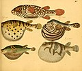 Naturgeschichte in Bildern mit erläuterndem Text (Taf. XV) (6059205234).jpg