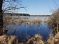 Naturschutzgebiet Großer Rußweiher 06.jpg