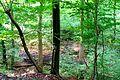 Naturschutzgebiet Saupark - Kleiner Deister - Wald (1).jpg