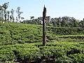Nelliyampathi Tea Garden.jpg
