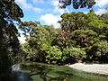 New Zealand temperate rain forests.JPG