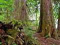 North Cascades National Park (9292783678).jpg