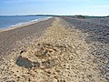 North end of Dunwich Beach - geograph.org.uk - 185066.jpg