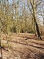 Oak wood, Mill Hill - geograph.org.uk - 132829.jpg