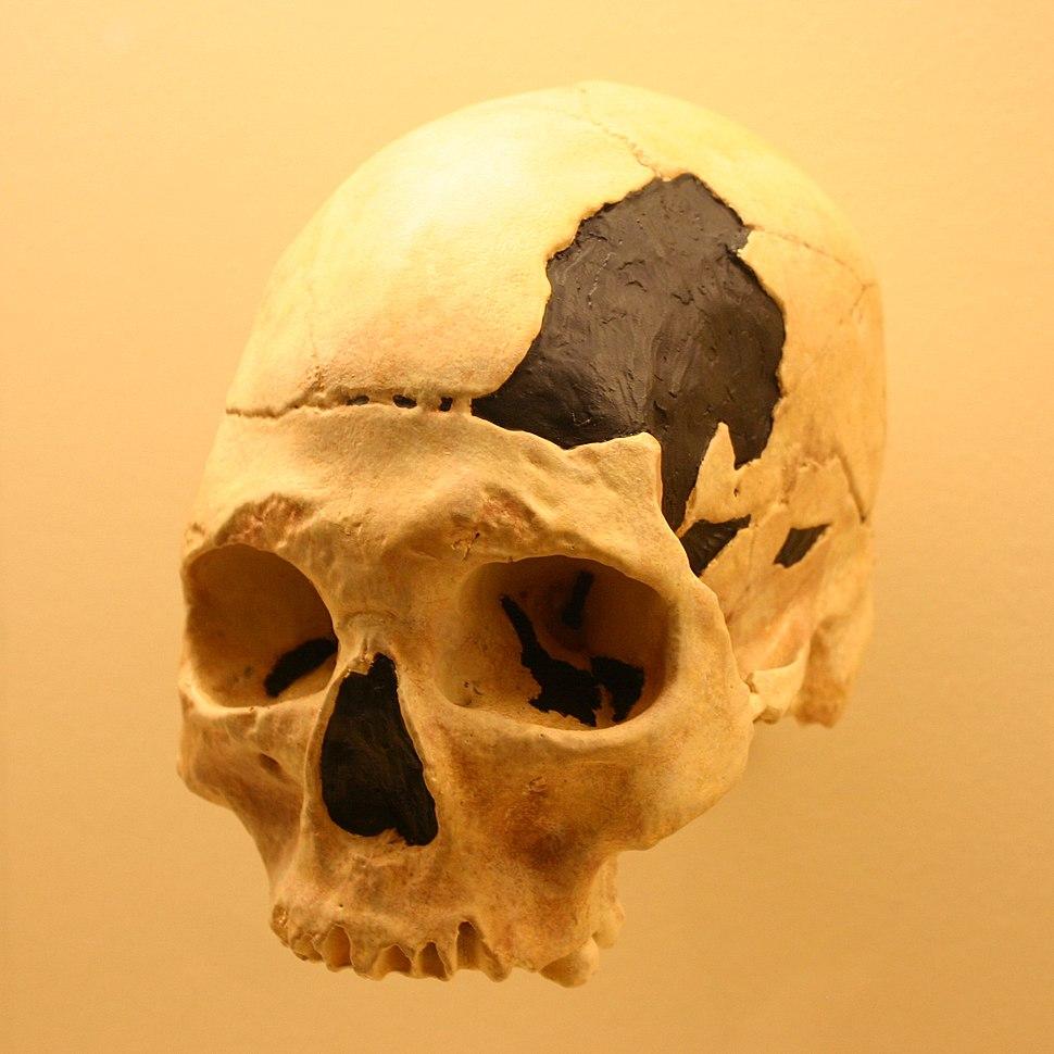 Oase 2-Homo Sapiens