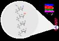 Oligonucleotide Structure.png