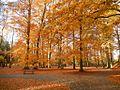 Oliwa park autumn4.jpg