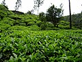 On The Way Munnar Hill Station - panoramio (8).jpg