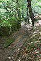 On the chestnut trail,welbeck. - panoramio.jpg