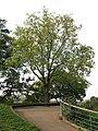 One Tree Hill, Greenwich Park - geograph.org.uk - 2104720.jpg