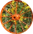 Orange wheel.png