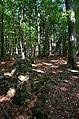 Osbecks bokskogar - KMB - 16001000180426.jpg